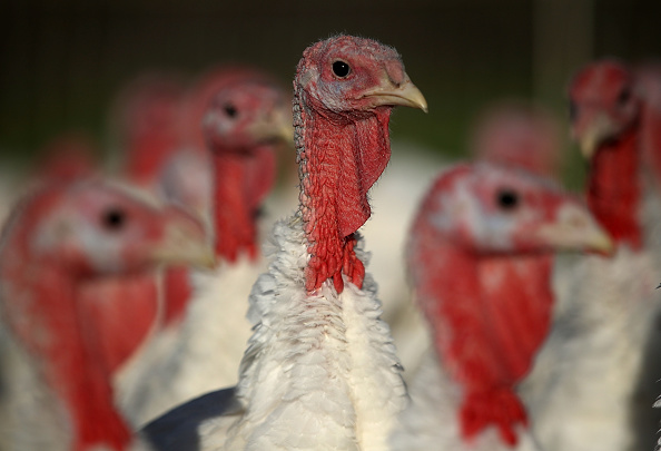 "Thanksgiving Is Approaching, And These ""Eco-Turkeys"" Still Don't Get It"
