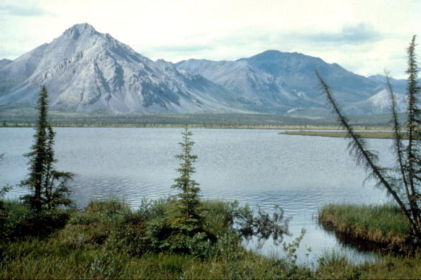 Jobs Alert!  ANWR Coastal Plain Lease Sale Process Begins Tomorrow